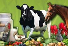 12.º Portugal Rural