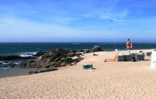 Tartaruga morta dá à costa em Vila do Conde