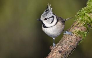 Dia Europeu de Observação de Aves em Vila do Conde