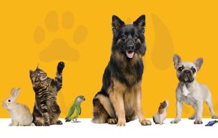 Dia Mundial do Animal em Vila do Conde