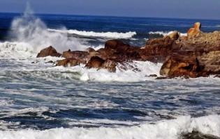 Observação de aves estuarinas e marinhas em Vila do Conde