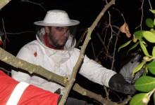 Destruídos 3 dos 13 ninhos de vespa asiática em Vila do Conde
