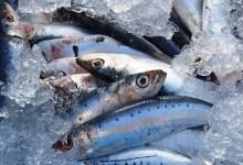 Pesca da sardinha interdita até final de fevereiro