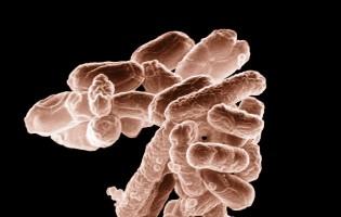 Cientistas descobrem uma bactéria resistente a antibióticos no rio Ave