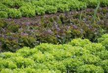 Inscrições abertas para horta biológica na zona da Varziela