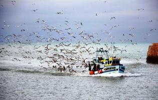 Barcos de sardinha regressaram ao mar