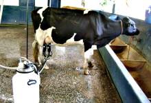 Produtores de leite de Portugal vão receber ajuda europeia