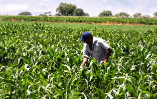 Litoral Rural abre Incentivos aos Agricultores