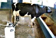 Produtores de leite com apoio extraordinário de 4 milhões