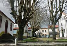 Queda de árvore danifica carro da PSP de Vila do Conde