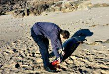 Golfinhos mortos dão à costa em Vila do Conde e Póvoa de Varzim
