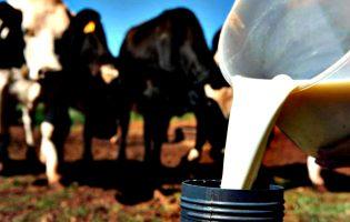 Novos desafios para a produção de leite em debate na Cooperativa Agrícola de Vila do Conde