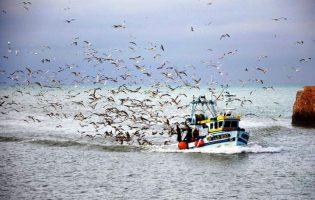 Pescadores podem apanhar 6.800 toneladas de sardinha até 31 de julho