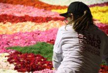 Vila do Conde acordou coberta de Tapetes de Flores no Corpo de Deus