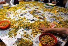 Vila do Conde vai acordar amanhã coberta de tapetes de flores