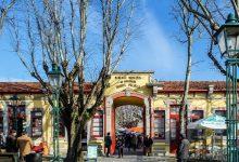 Mercado urbano de verão reúne Comité em Vila do Conde