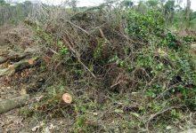 Vila do Conde recolheu em junho mais de 100 toneladas de resíduos verdes