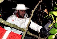 5 ninhos de vespa asiática queimados em Vila do Conde