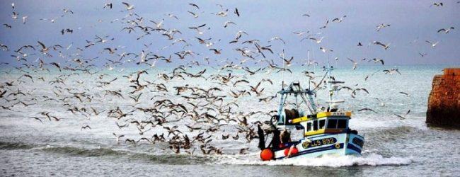 Pesca da sardinha através do cerco está proibida em Portugal