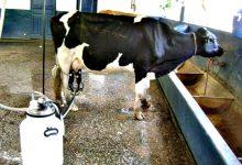 O Estatuto da Pequena Agricultura Familiar debatido na Agros