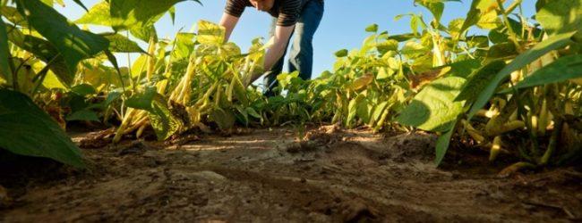 Conselho Municipal de Agricultura vai implementar roteiro turístico rural em Vila do Conde