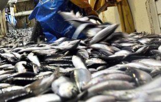 Portugal e Espanha podem pescar até 14.600 toneladas de sardinha em 2018