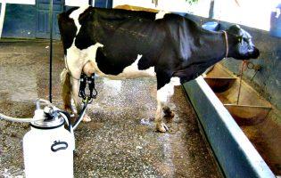 APROLEP critica redução de um cêntimo por litro de leite