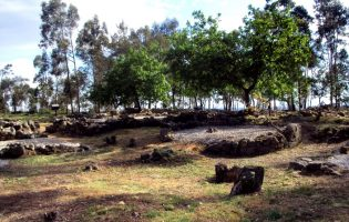 Câmara Municipal de Vila do Conde faz regeneração de árvores na Cividade de Bagunte