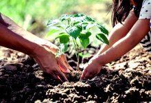 Pé Ante Pé e Amigos do Mindelo plantam árvores na ROM de Vila do Conde