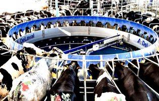 APROLEP diz que solução da crise no setor do leite só é possível com uma união estratégica