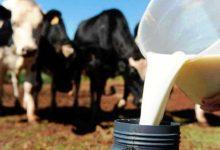 Produtores de leite portugueses receberam menos 421,5 Milhões de Euros do que a média dos países da União Europeia