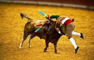 PróToiro anuncia pedido de tourada na Póvoa de Varzim apesar de proibição pela Câmara