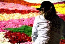 Vila do Conde representa Portugal em Itália nos tapetes de flores Pietra Ligure in fiore