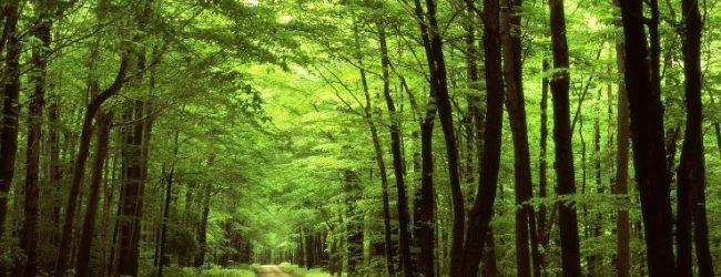 Quer fazer voluntariado nas florestas com o do Instituto Português do Desporto e Juventude?