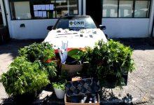 10 pessoas detidas em Vila do Conde  por usarem loja para vender droga plantada no quintal