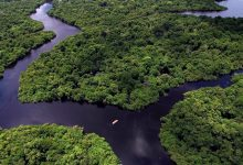 Investigadores do CIBIO-InBIO de Vila do Conde desvendam biodiversidade da Amazónia