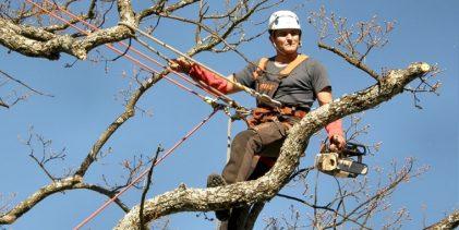 Estudo de 2018 diz que nenhuma das árvores analisadas em Vila do Conde aparentava risco