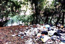 Lixo da escola Alexandre Herculano do Porto depositado ilegalmente em mata de Vila de Conde