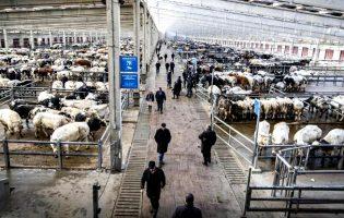 Comissão de Proteção Civil proíbe realização de mercado de gado na Póvoa de Varzim