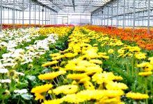 """Produtora da Póvoa de Varzim diz que empresa já está """"a deitar muitas flores para o lixo"""""""
