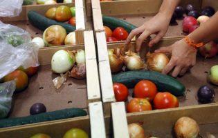 Produtores hortícolas da Póvoa de Varzim asseguram abastecimento dos mercados