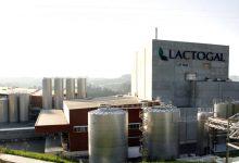 Trabalhadores da Lactogal em greve