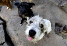 Serviços Veterinários de Vila do Conde acolhem quatro animais dos abrigos ilegais em Santo Tirso