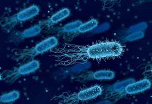 Tutela confirma colheitas de água devido ao novo surto de Legionella mas recusa prazos e medidas