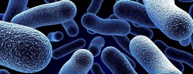 ARS-N dá como extinto surto de Legionella no Grande Porto com o total de 88 casos e 15 mortes