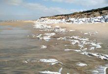 PAN denuncia poluição por sacos plásticos em praia da freguesia da Estela na Póvoa de Varzim
