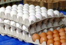 Governo diz que em Portugal não há ovos contaminados
