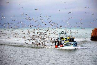 Pescadores do Norte protestam contra coimas aplicadas por Autoridade Tributária e Aduaneira