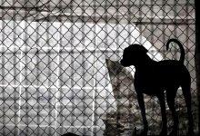 Associação Portuguesa ANIMAL preocupada com sobrepopulação de canis e gatis devido à Covid-19