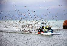 """Pescadores do Norte estão """"preocupados"""" com a possível quebra na venda de sardinha no verão"""